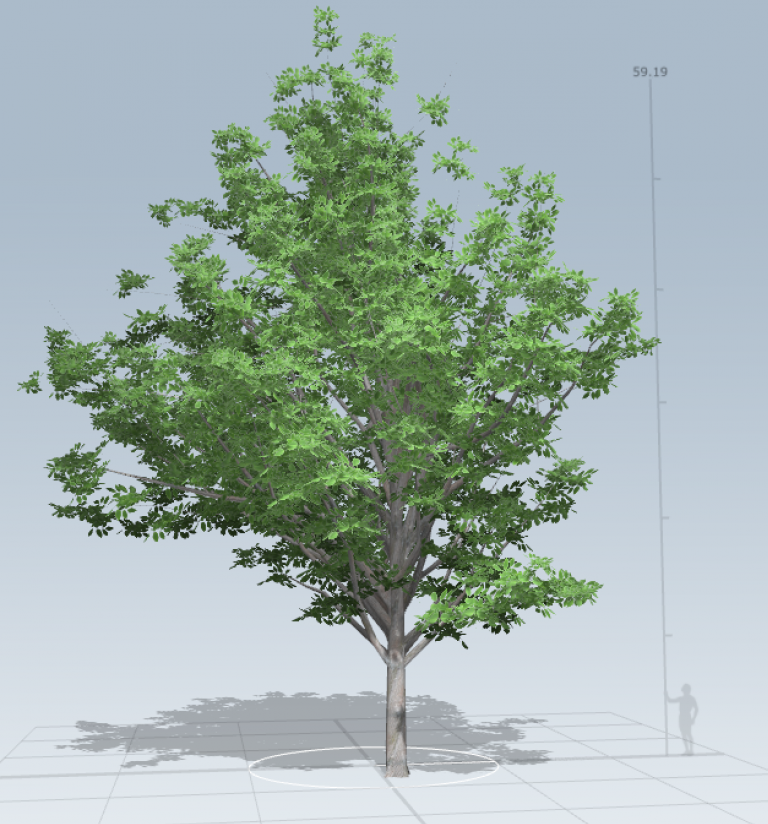 campus_tree01.PNG